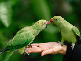 signs your bird trusts you