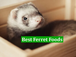 Best Ferret Foods