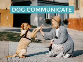 Dog Communicate