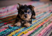 Surprising First Year Puppy Costs